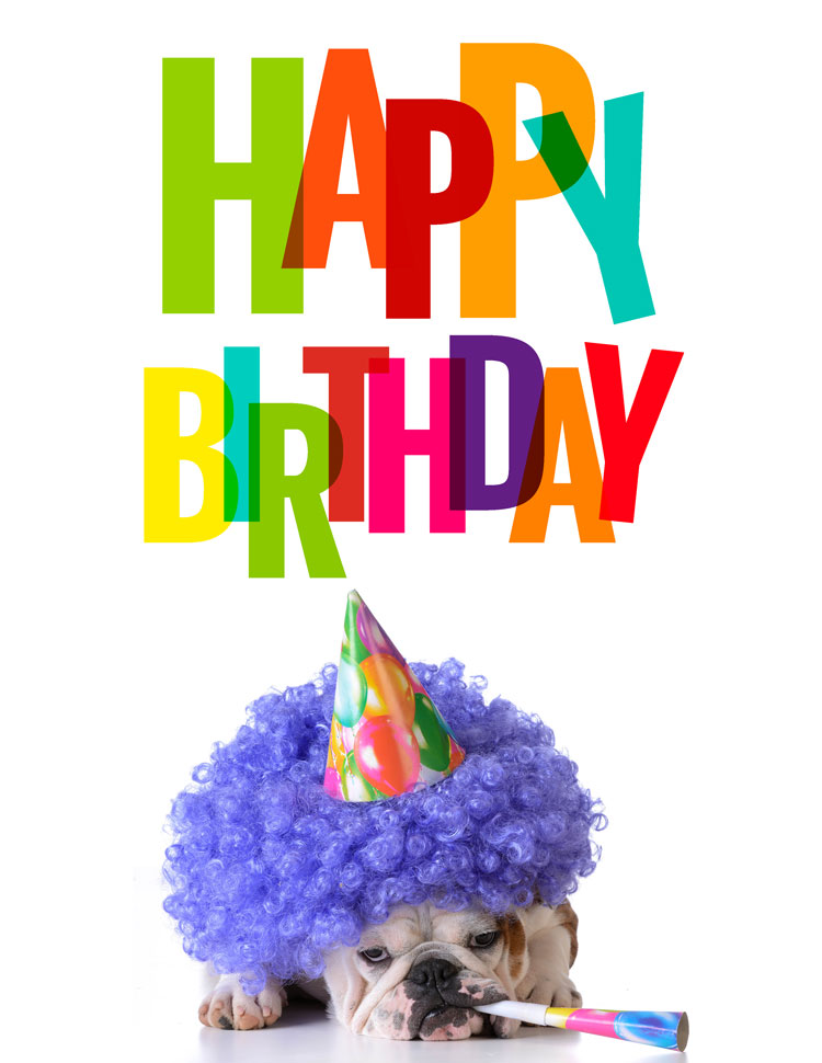 Colorful Happy Birthday Above A Dog With Purple Clown Hair And Hat